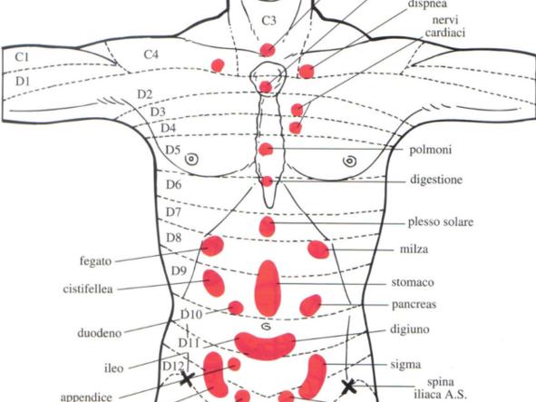 Réflexologie Abdominale et Thoracique: Les dermalgies de Jarricot